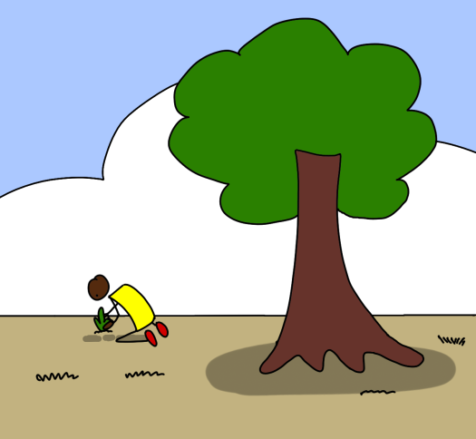 best-time-to-plant-a-tree.png